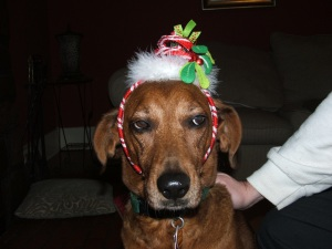 Felix was not impressed with his festive headgear and began plotting a messy end for his owner's favourite shoes
